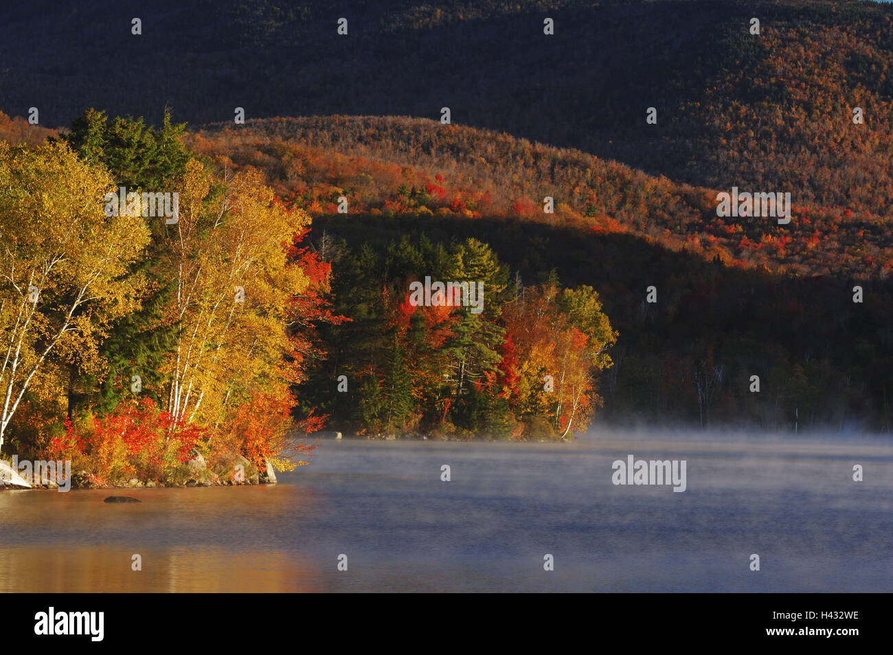 Forest Usa Fog Stockfotos & Forest Usa Fog Bilder - Seite 34 - Alamy