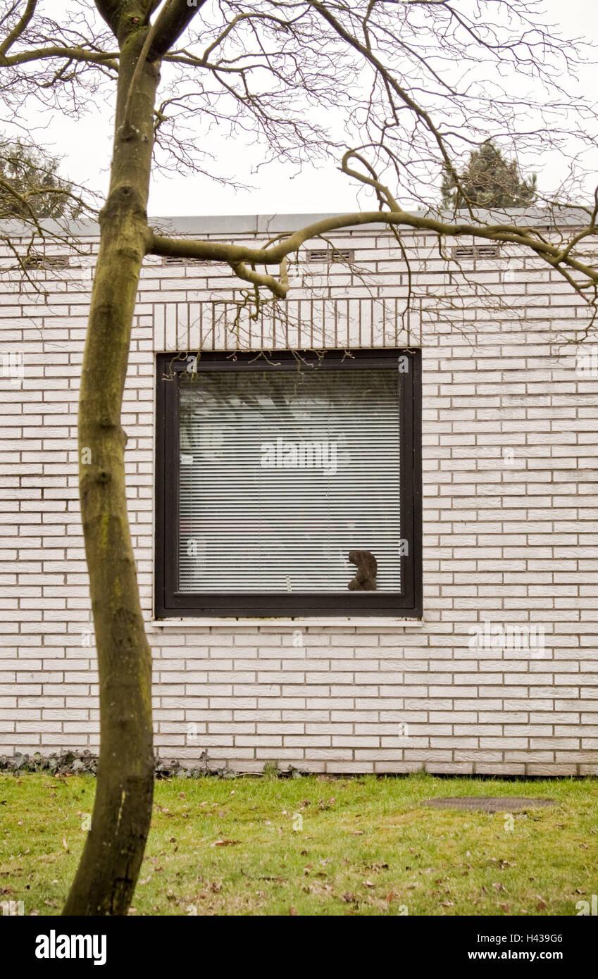 Bungalow, Fenster, Jalousie, Baum, kahl, Wohnhaus, Wohn-Haus ...