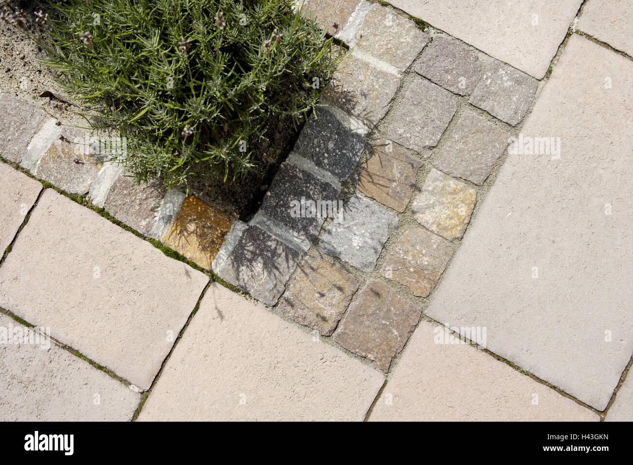 abgrenzung, patch, lavendel, garten, terrasse, pflastersteine