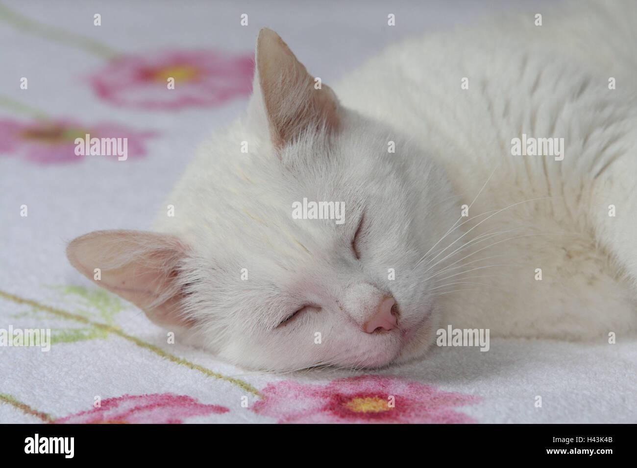 Katze Weiß Schlafen Bett Porträt Tiere Säugetiere Haustiere