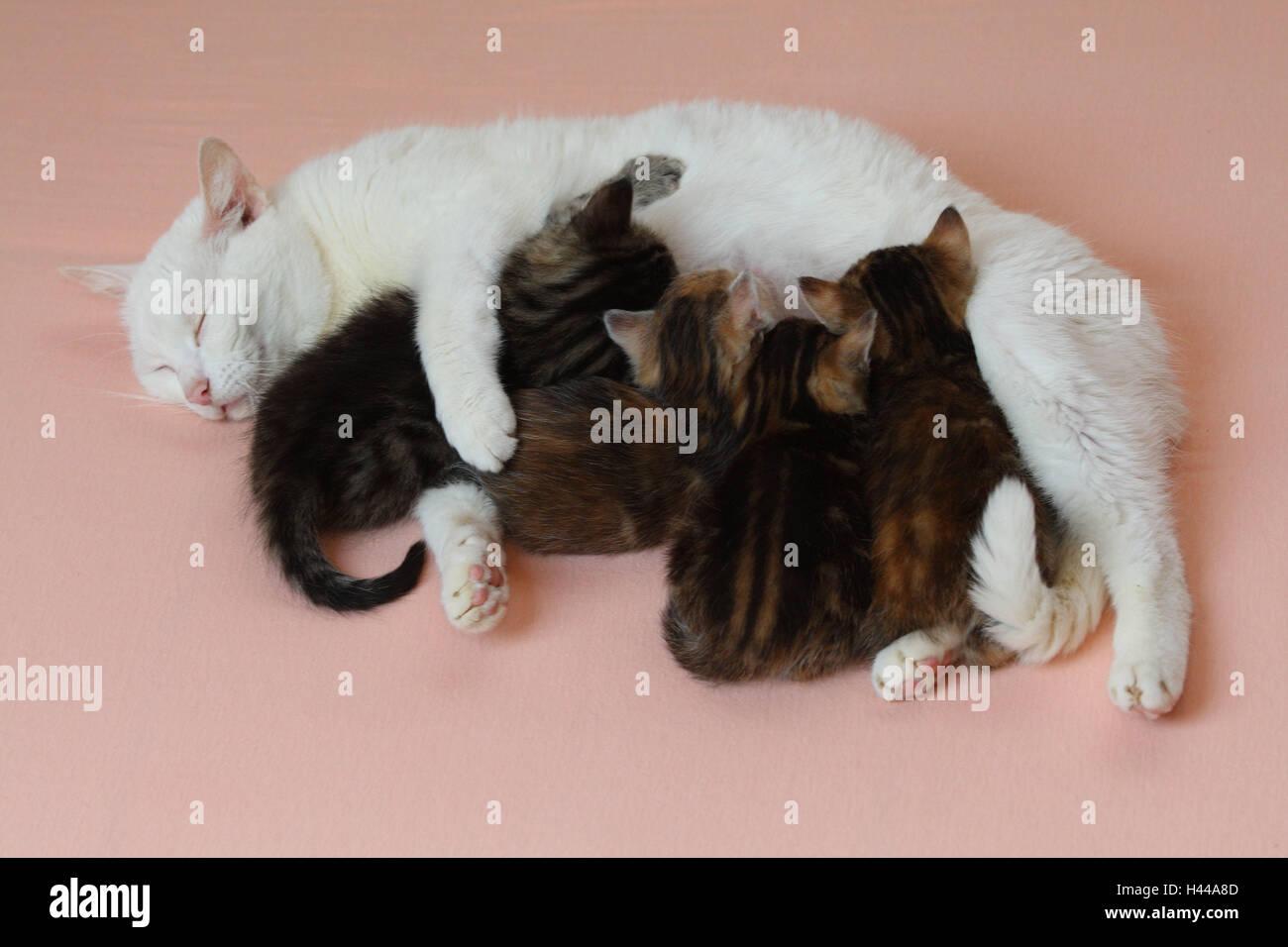 Katze Nuss Lüge Kätzchen Krankenschwester Bett Tiere