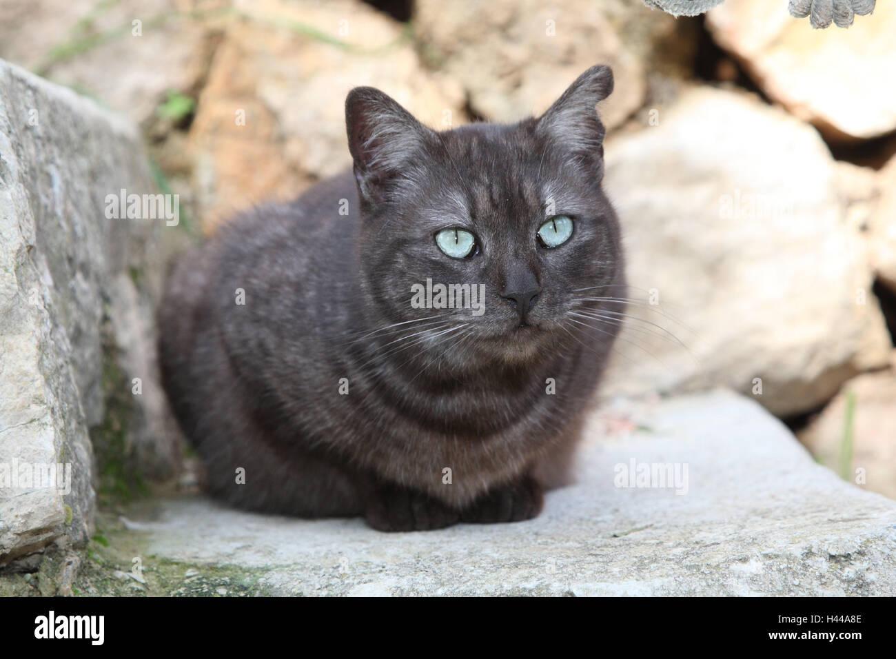 Katze, dunkelgrau, blaue Augen, Crouch, Treppen, Tiere, Säugetiere, Haustiere, kleine Katzen, Felidae, zähmen, Stockbild