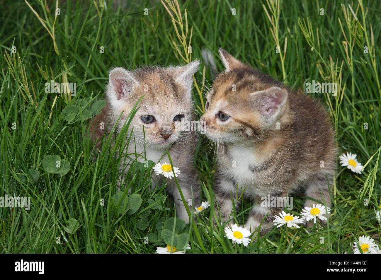 katzen junge sitzen wiese garten tiere s ugetiere haustiere kleine katzen felidae. Black Bedroom Furniture Sets. Home Design Ideas