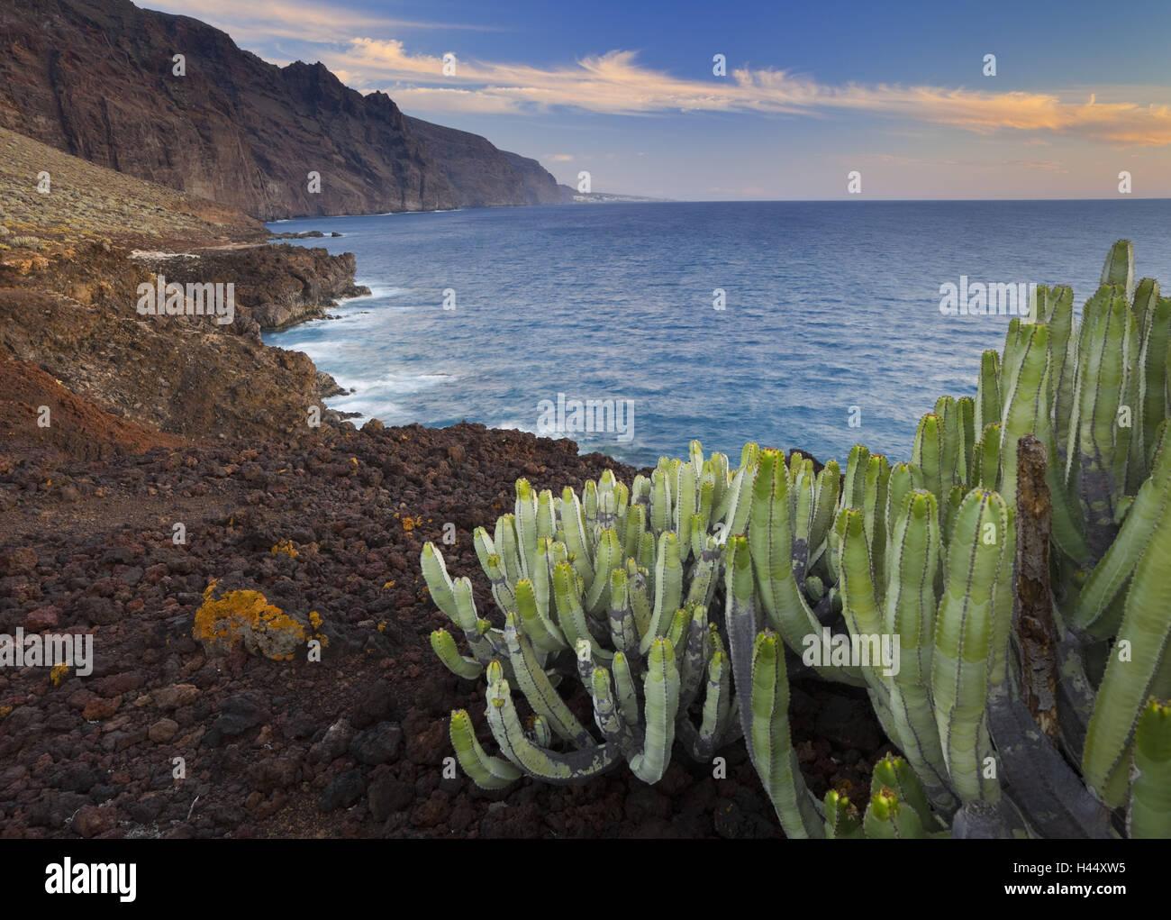 Spanien, Kanarische Inseln, Teneriffa, Punta di Teno, Los Gigantes, Kakteen, Stockbild
