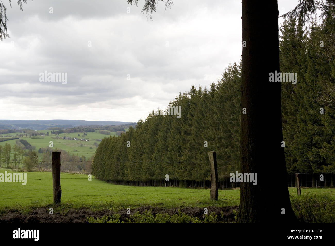 Trees Belgium Stockfotos & Trees Belgium Bilder Seite 13 Alamy