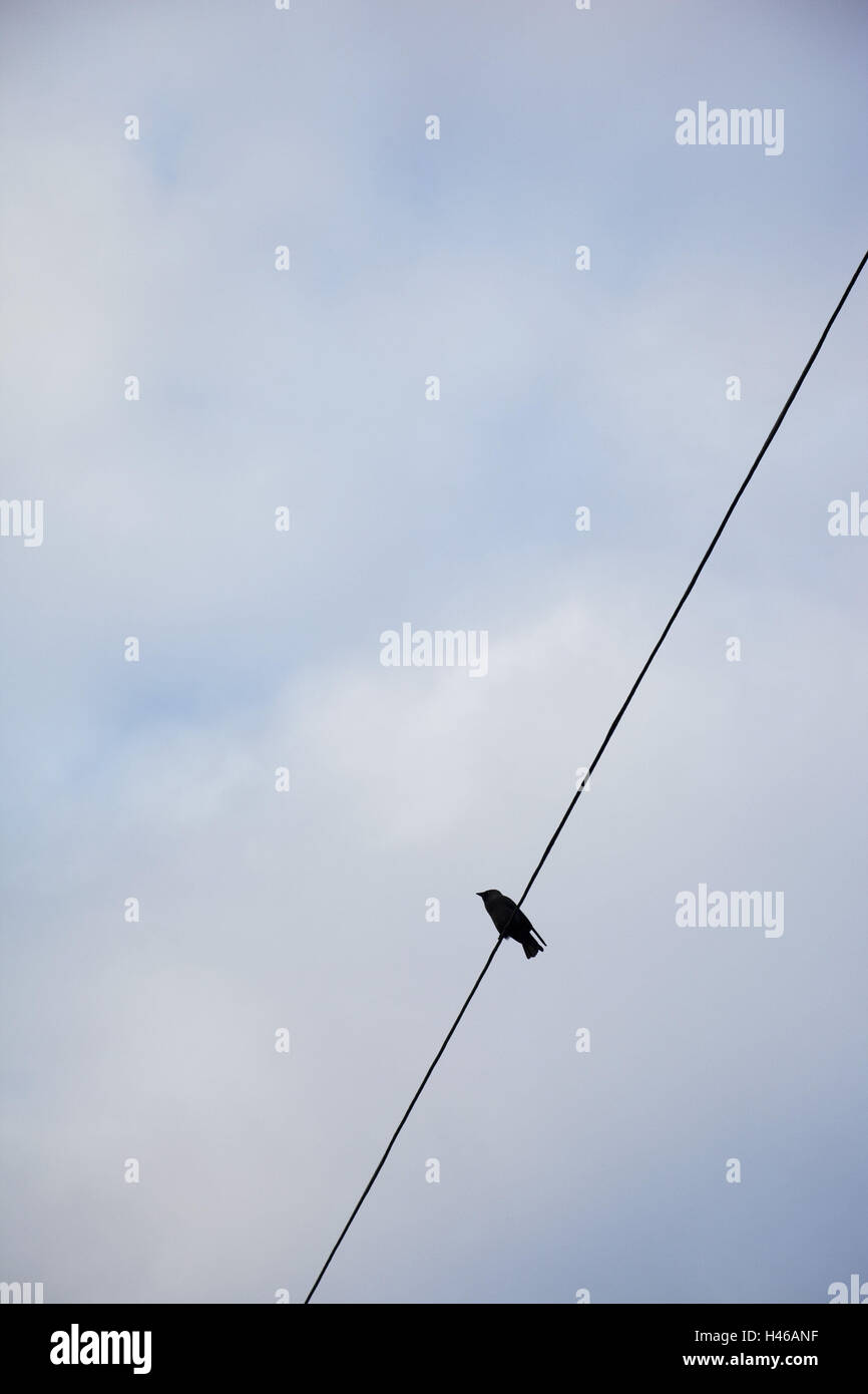 Vogel, Versorgungsleitung, Stockbild