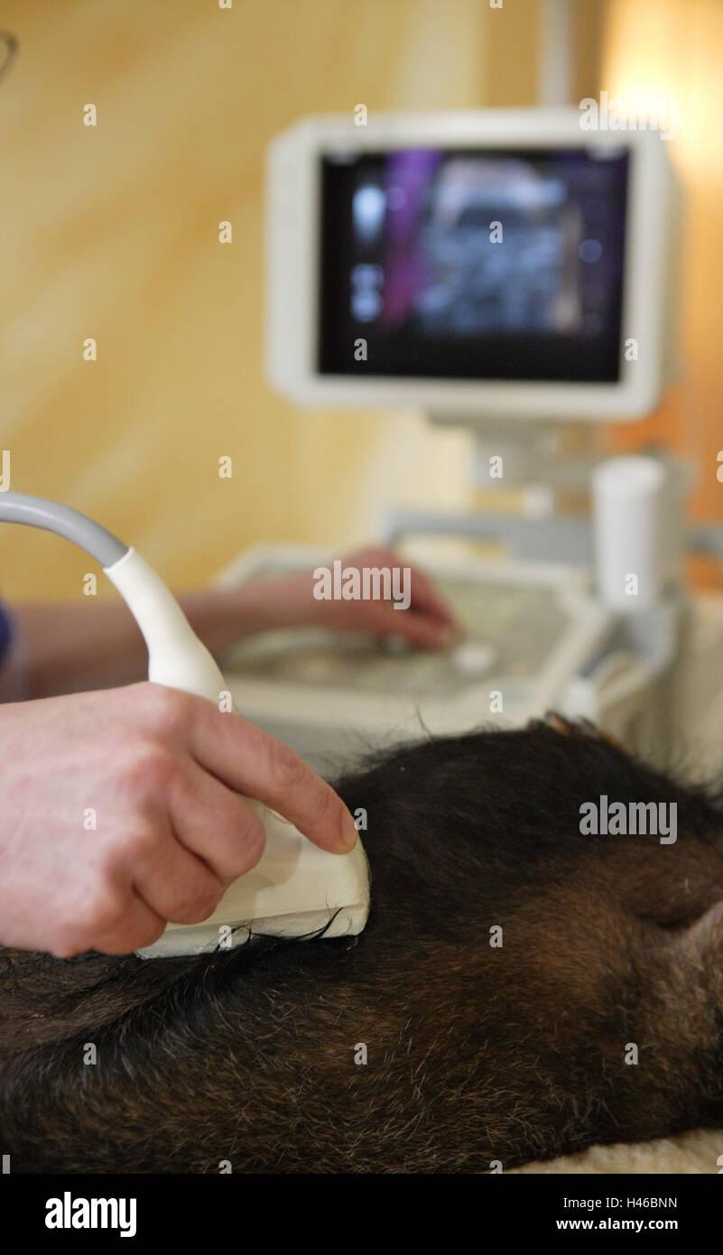 Gemütlich Medizinischer Sonographeur Fotos - Menschliche Anatomie ...