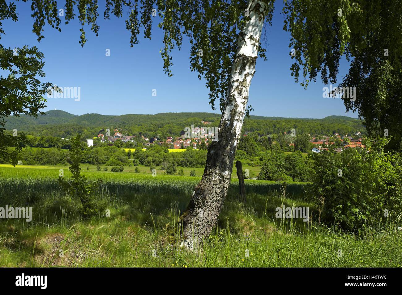 Deutschland, Niedersachsen, Harz, Bad Sachsa, in der die totale mit Berg-Raben in den Knicken, Schwiebachtal, Stockbild