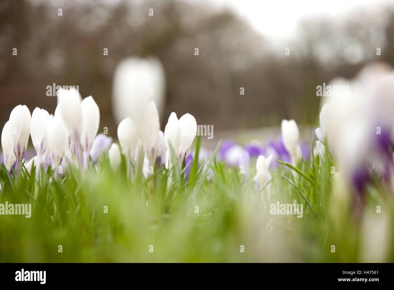 Grass Krokusse Aussen Fruhling Jahreszeiten Pflanzen Blumen
