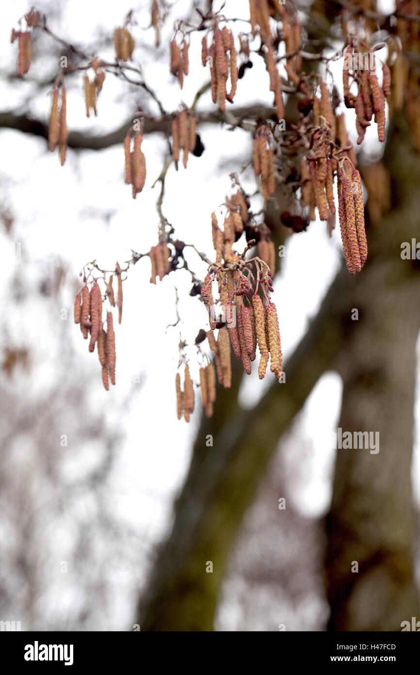Baum, Ast, Blumen, im Freien Schuss, Frühling, Jahreszeiten, blühen, Zweig, Natur, Stockbild
