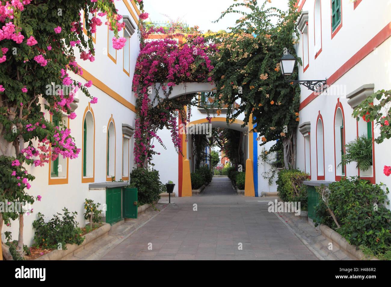 Kanarische Inseln, Gran Canaria, Puerto de Mogan, Lane, Blumen, rosa, Hafen, Trauerweiden, Stadt, Spanien, Landschaften, Stockbild