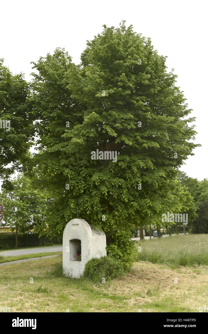 Deutschland, Nordrhein-Westfalen, Düsseldorf, Wittlaer Ecke Kalkstrasse, kleinblättrige Linde, Bildstock, Stockbild