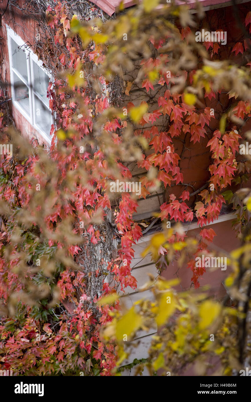 Baum, Blätter, Herbst färben Stockfoto, Bild: 123137580 - Alamy