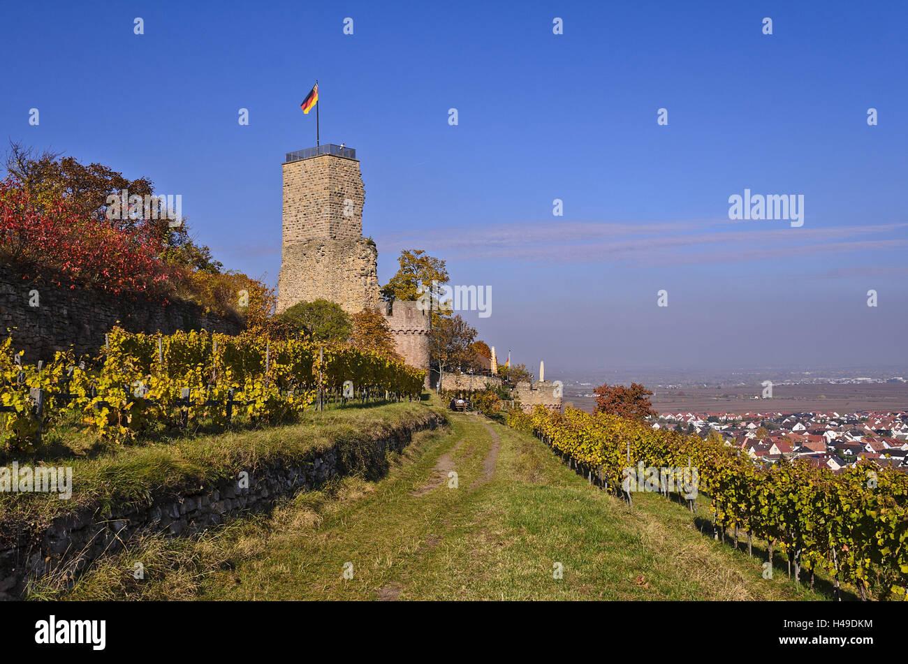Deutschland, Rheinland-Pfalz, Pfalz, Deutsche Weinstraße, Wachenheim ...