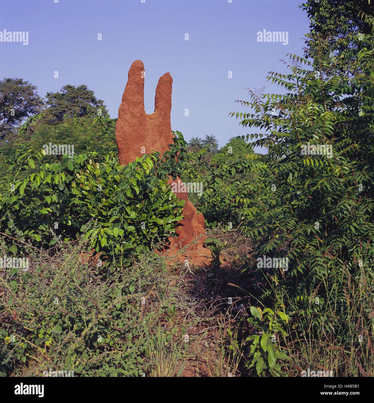 Termiten Im Haus: Senegal Construction Stockfotos & Senegal Construction