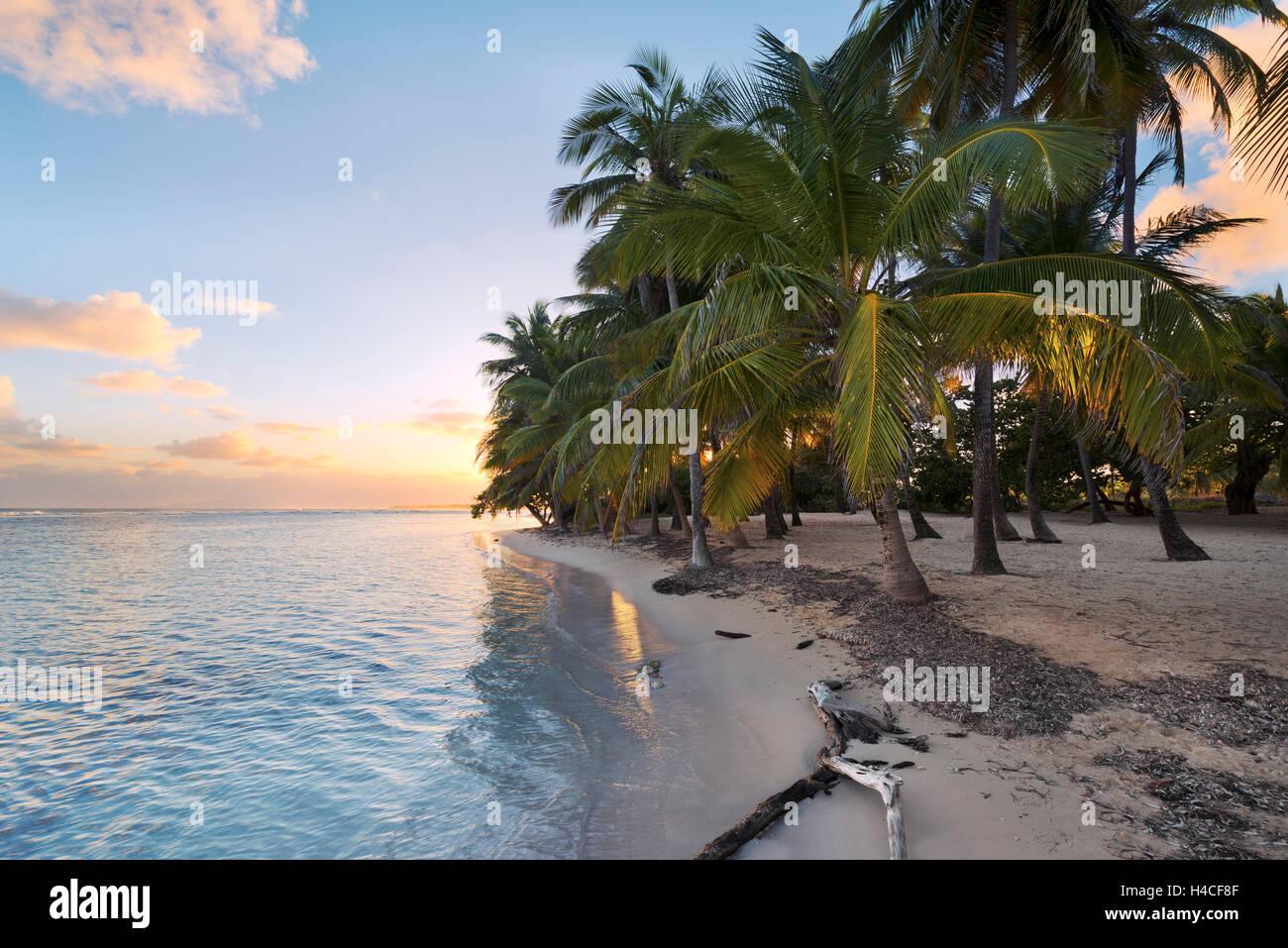 Guadeloupe Karibik Frankreich Insel Tropisch Paradies Palmen