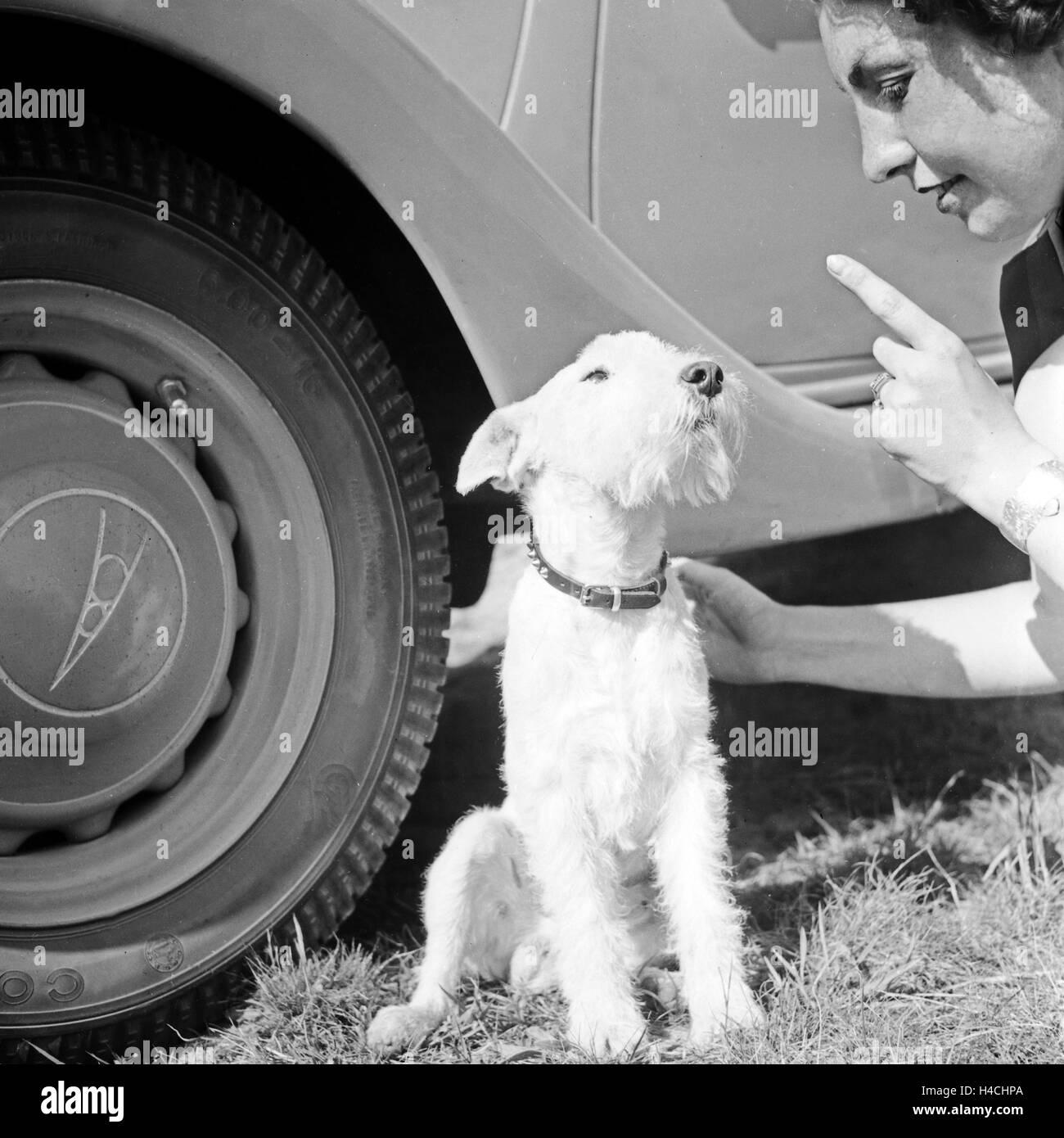 Beste Drahthaariger Terrier Yorkie Mischung Ideen - Der Schaltplan ...