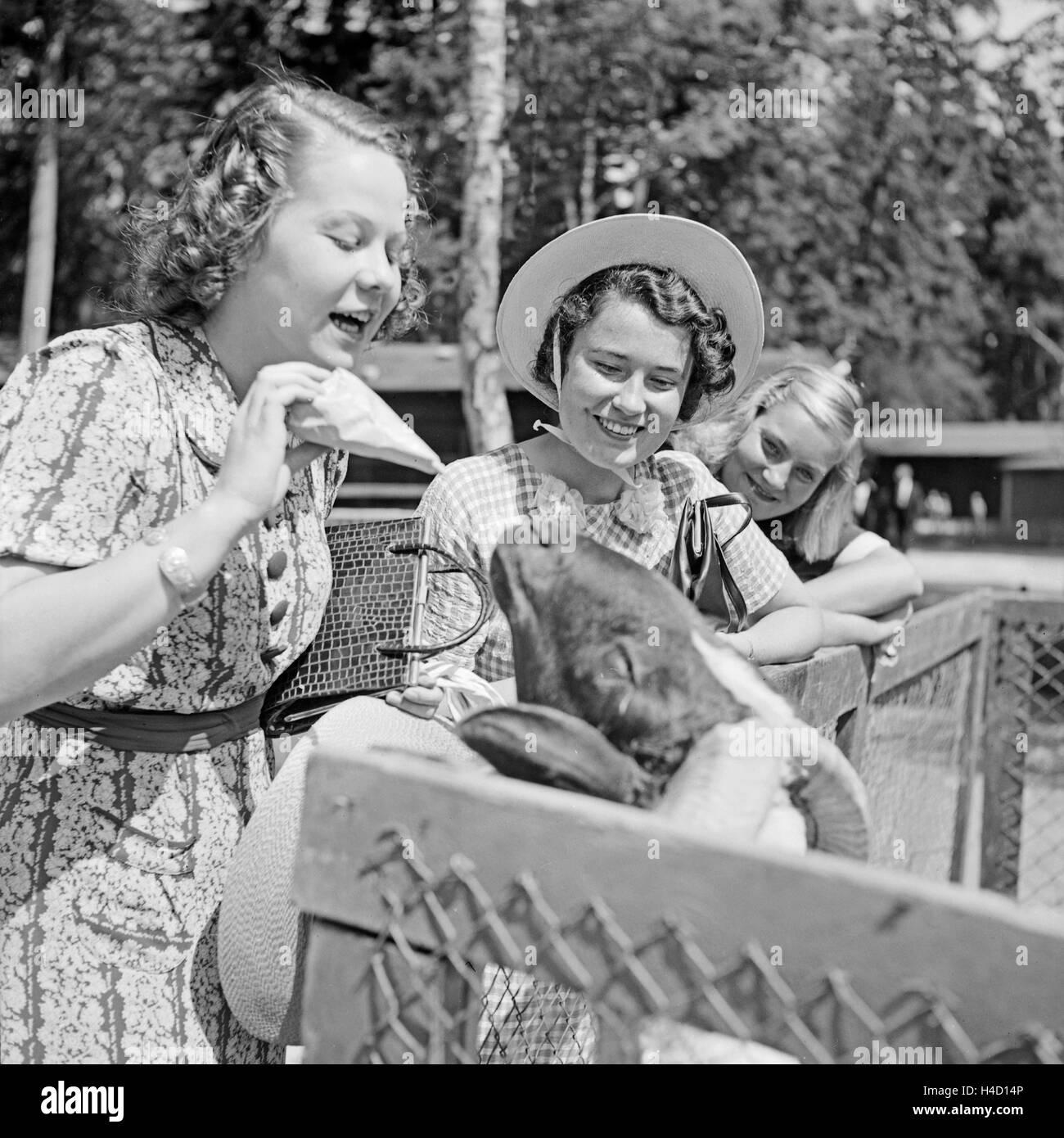 Drei Junge Frauen bin Ziegengehege Im Wilhelma Tierpark in Stuttgart, Deutschland, 1930er Jahre. Drei junge Frauen Stockbild