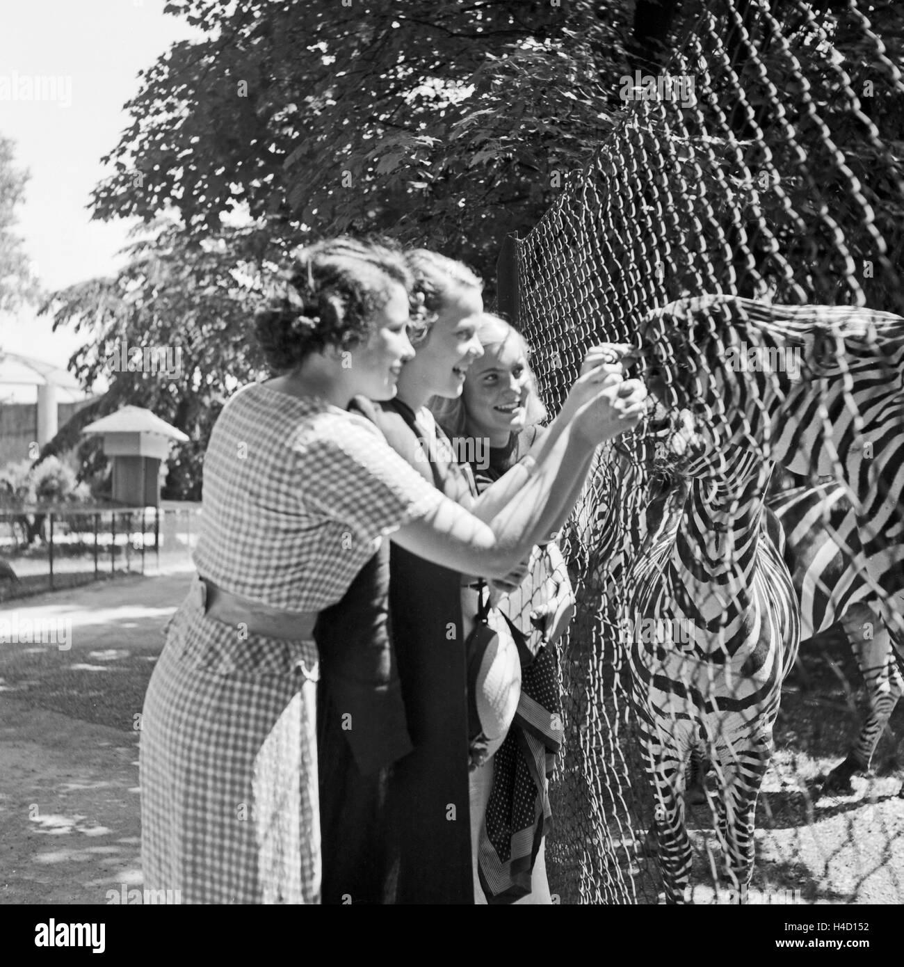 Drei Junge Frauen bin Zebragehege Im Wilhelma Tierpark in Stuttgart, Deutschland, 1930er Jahre. Drei junge Frauen Stockbild