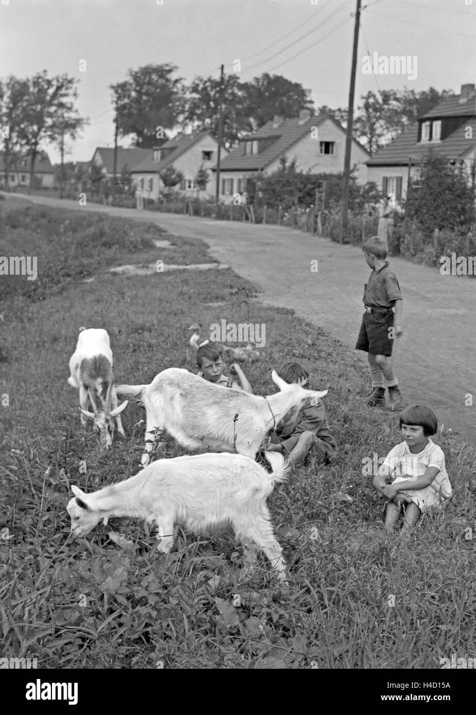 Kinder Einer Reihenhaussiedlung Beim Ziegenhüten, 1930er Jahre Deutschland. Kinder eine serielle Häuser Stockbild