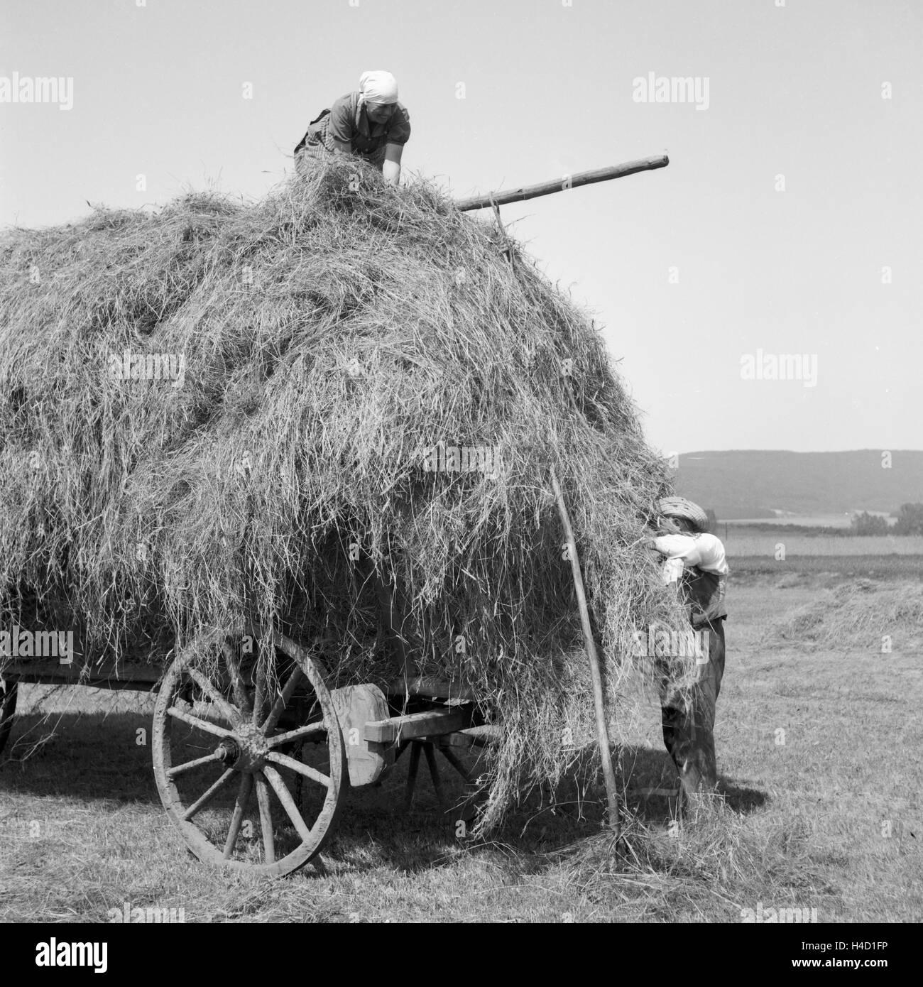 Bauern Bei der Heuernte in Westfalen, Deutschland, 1930er Jahre. Bauern Heuernte am Wesfalia, Deutschland der 1930er Stockbild