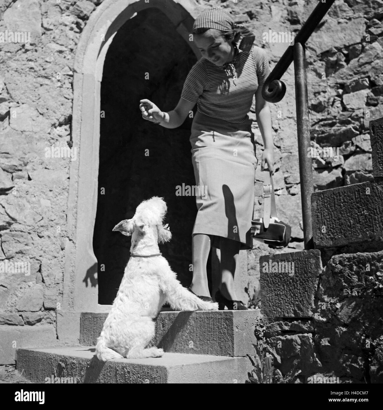 Eine Junge Frau Mit Dachmarke Hund, Deutschland, 1930er Jahre. Eine junge Frau mit ihrem Hund, Deutschland der 1930er Stockbild