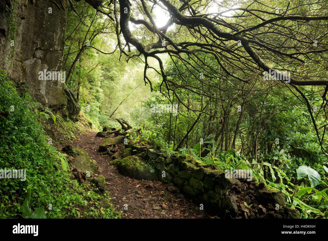 Weg zu den Wasserfällen Salto do Prego, Sao Miguel, Azoren, Portugal Stockfoto