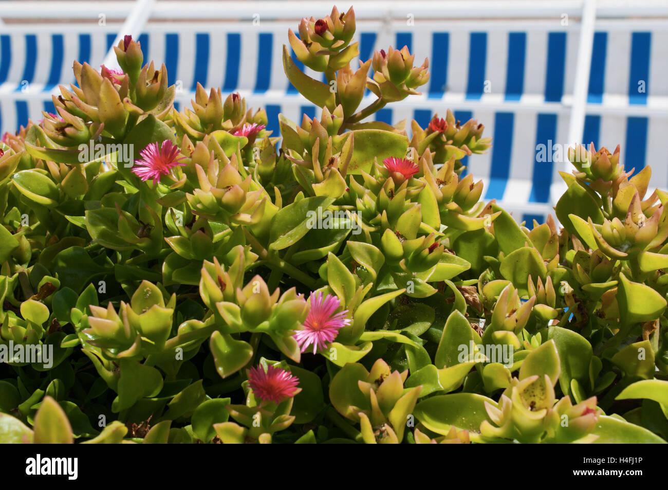 fuerteventura kanarische inseln nordafrika spanien outdoor dekoration im maritimen stil. Black Bedroom Furniture Sets. Home Design Ideas