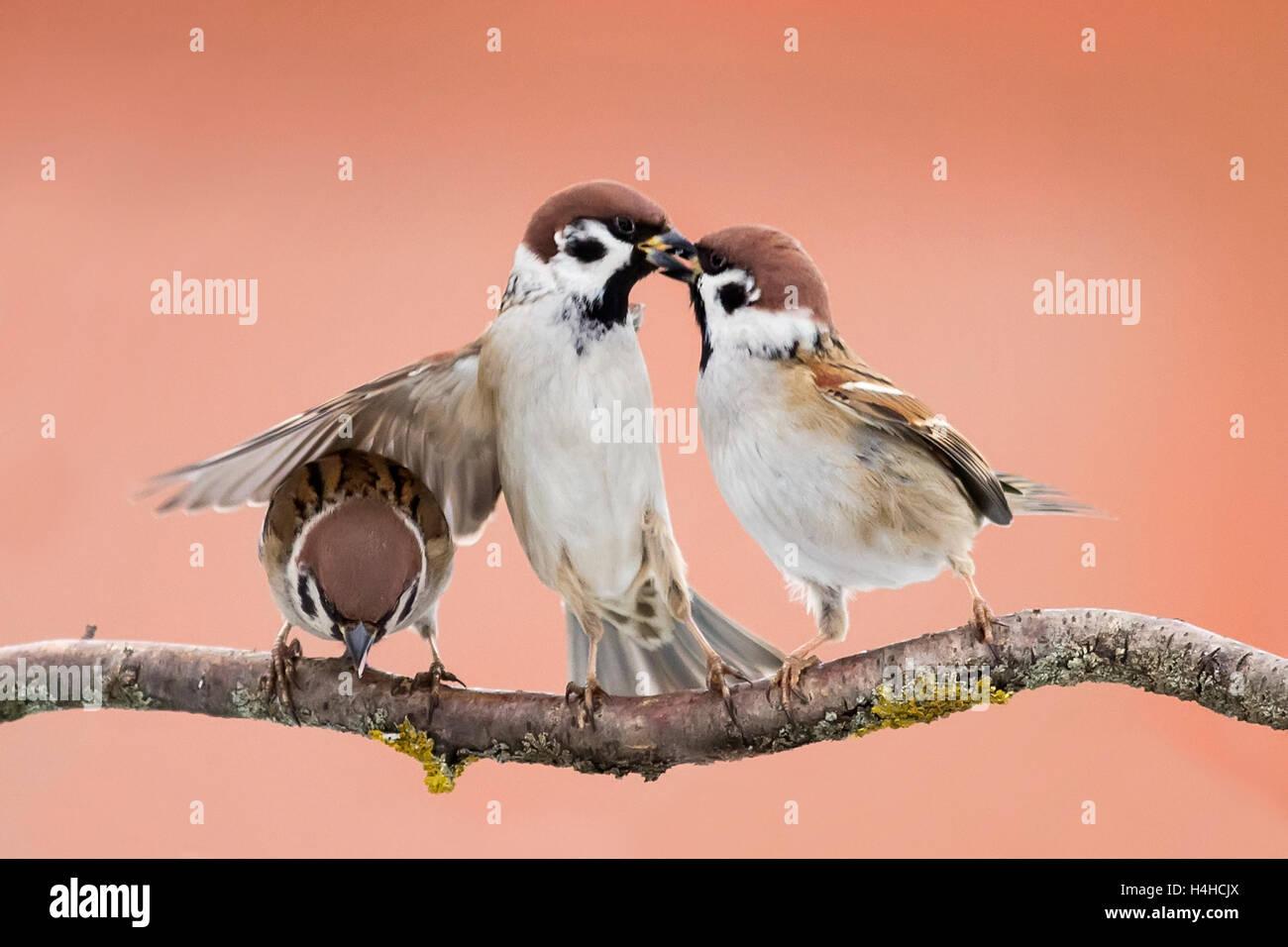 Angry Birds Kämpfen In Den Himmel Frühling Lustige Flügel Zu Spielen