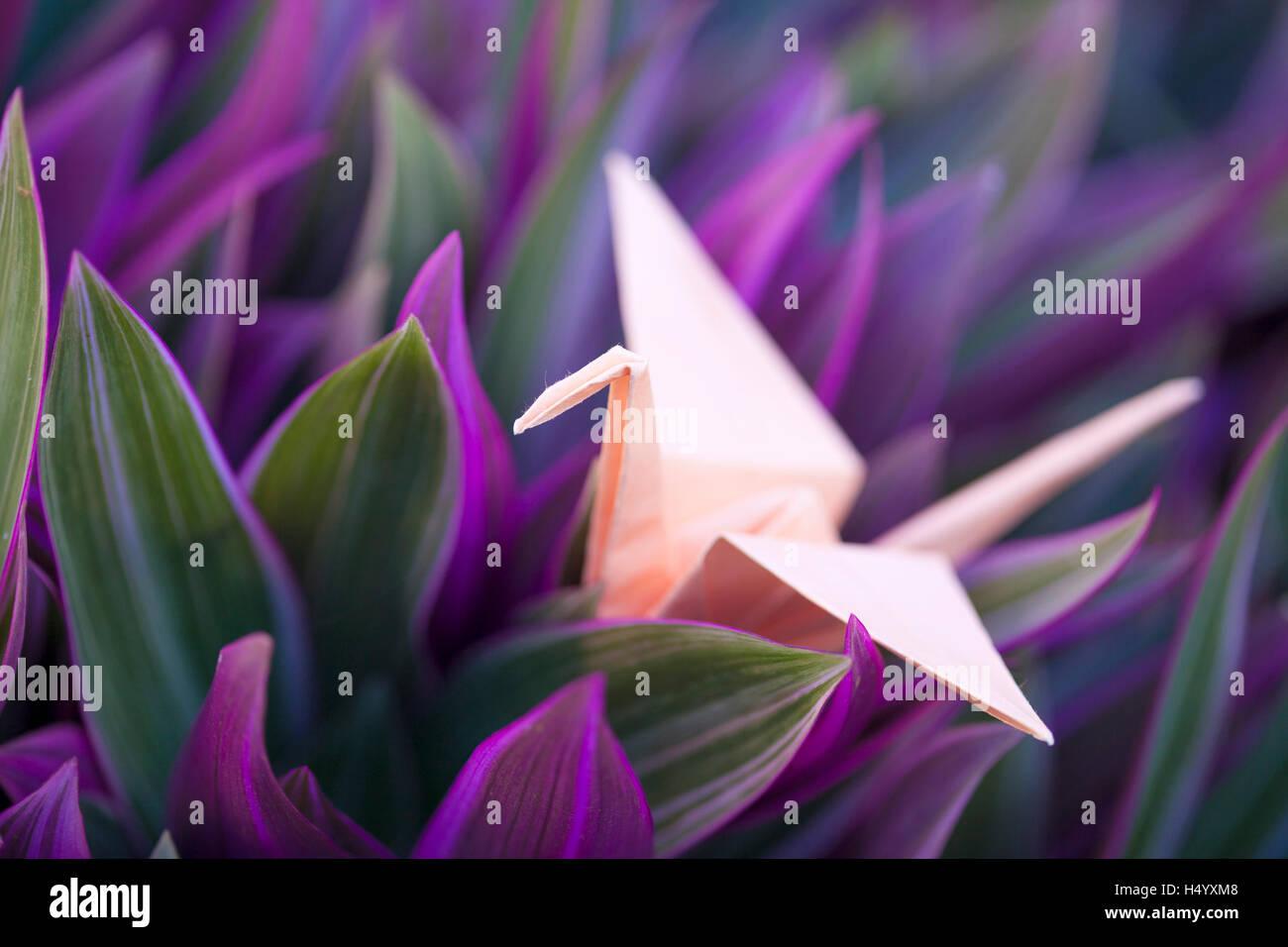 Origami Papier Kran im bunten Laub von Tradescantia spathacea Stockbild
