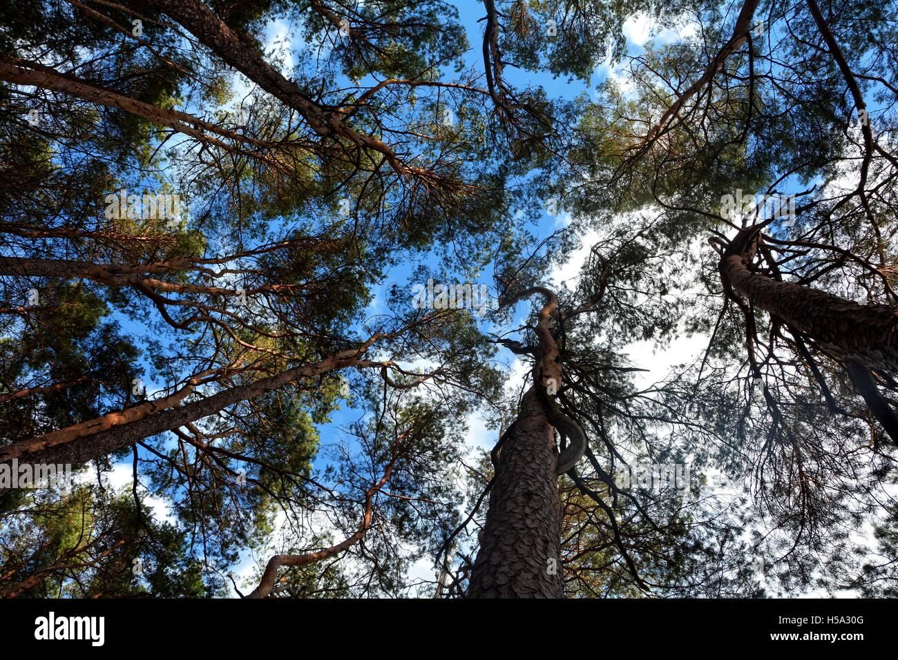 Himmel und Wipfeln der Bäume Stockbild