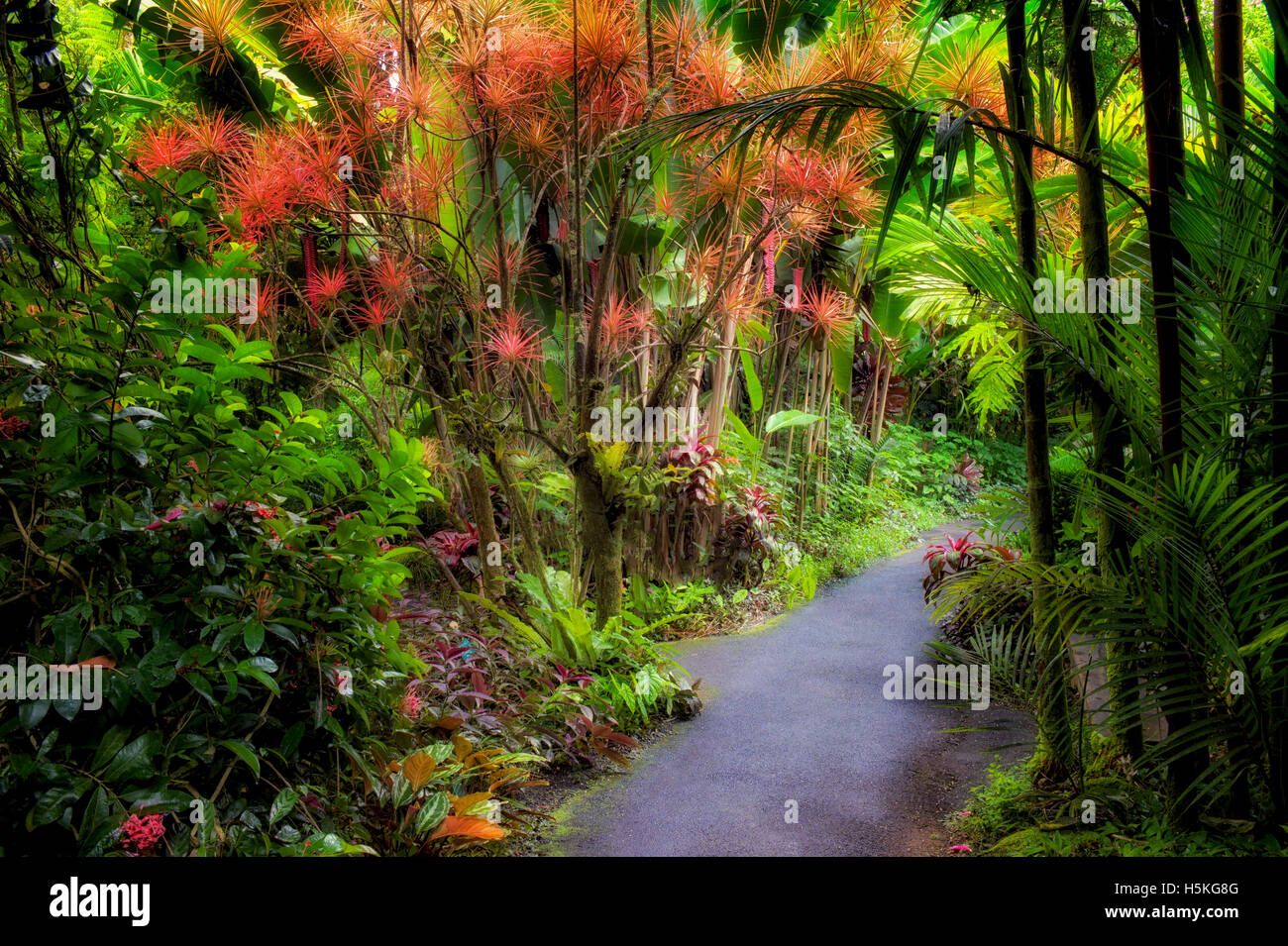 Weg in Hawaii Tropical Botanical Gardens. Hawaii, Big Island. Stockfoto