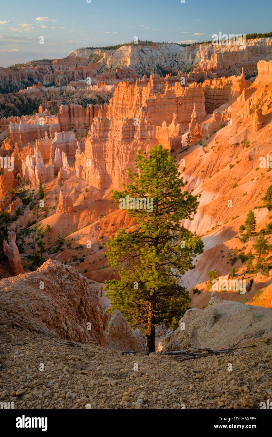 Sonnenaufgang und einen herrlichen Blick auf das Amphitheater, Bryce-Canyon-Nationalpark, Utah, gelegen im Südwesten Stockfoto