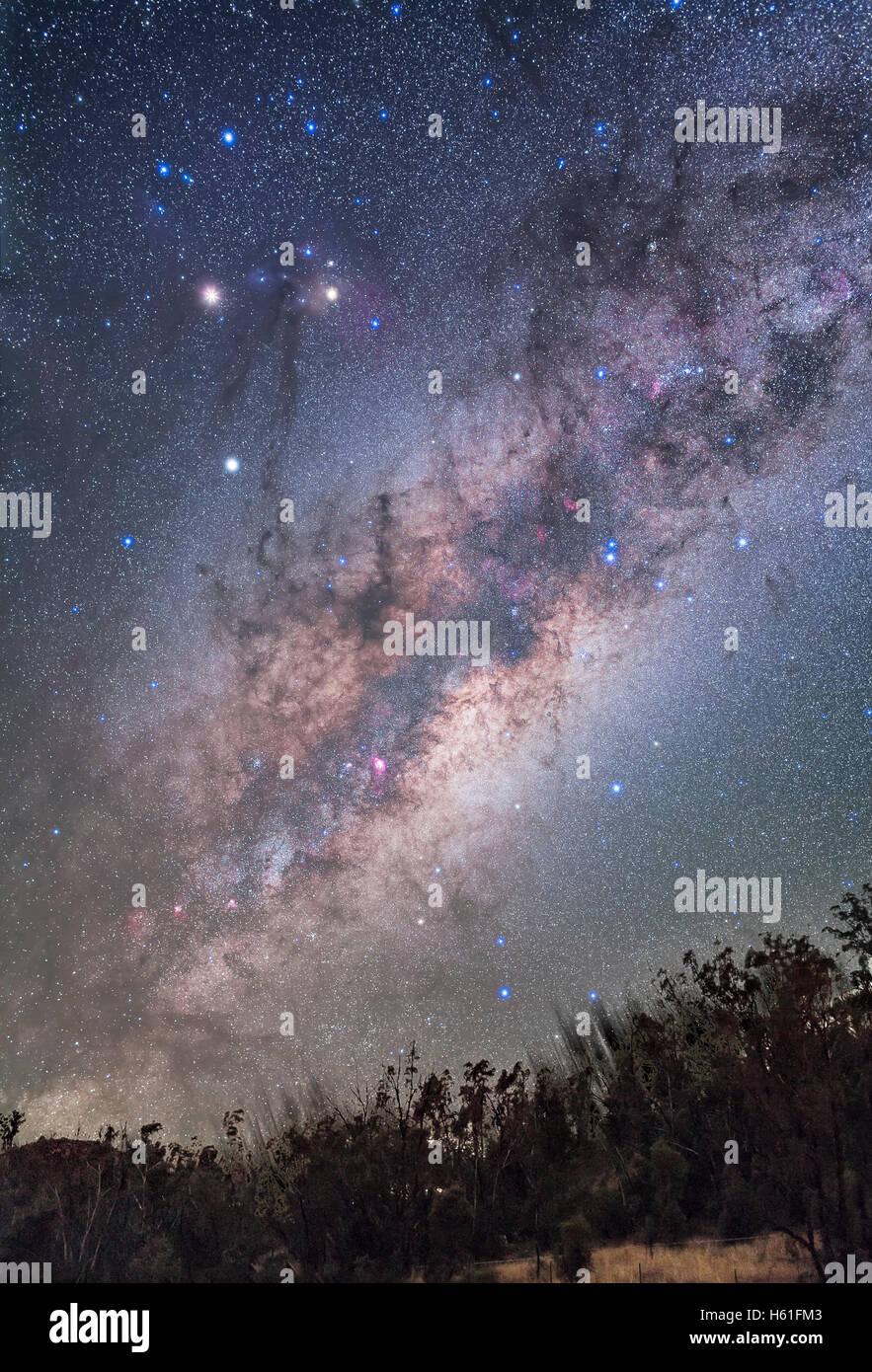 Das Zentrum der Galaxie Region in Schütze erhebt sich über den Baumwipfeln, mit reichen Sternenfelder Stockbild