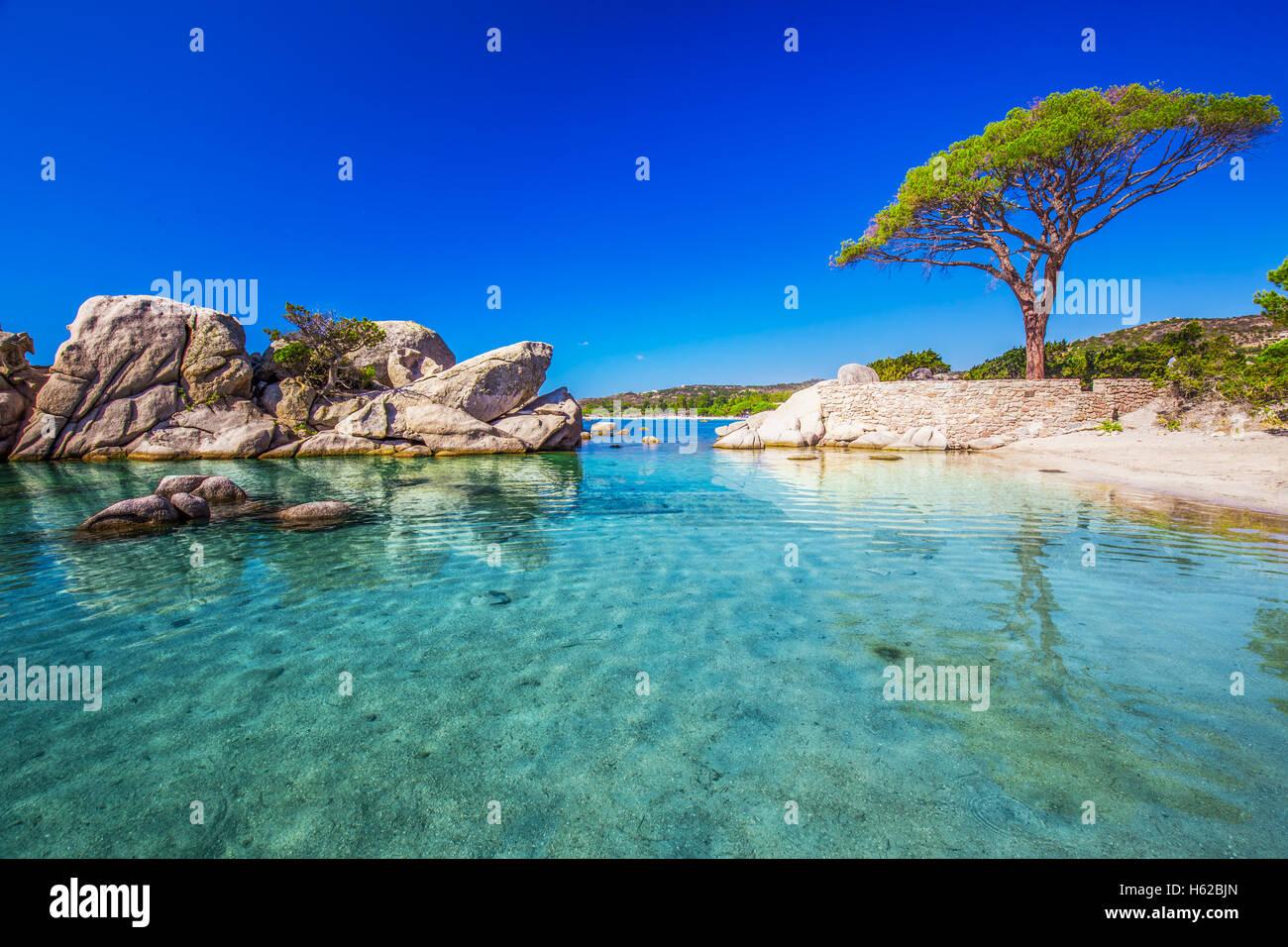 Berühmte Kiefer auf Palombaggia Strand mit Azure klares Wasser und Sandstrand im Süden von Korsika, Frankreich Stockbild