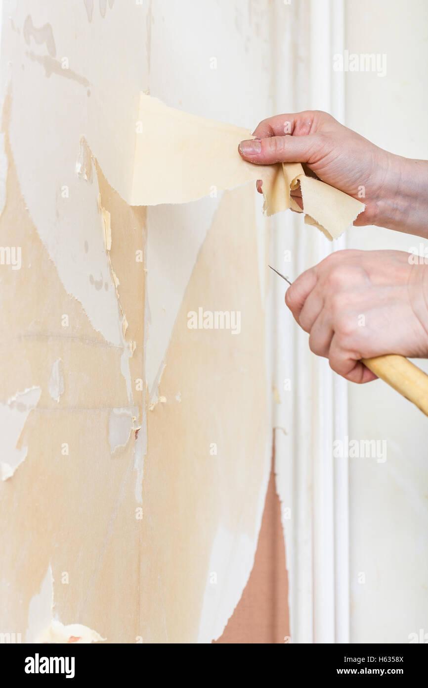 Renovierung Der Wohnung, Tapezieren: Reinigung Der Wände. Entfernen Der  Tapete Von Der Wand Sichern.