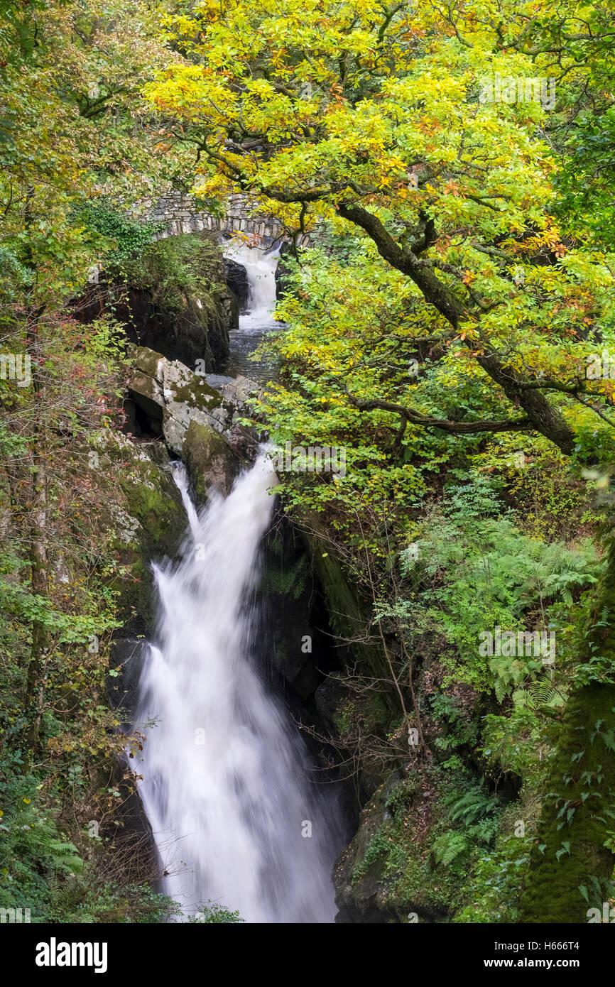 Aira Force Wasserfall mit Herbstfärbung, in der Nähe von Ullswater, Seenplatte, Cumbria UK Stockbild