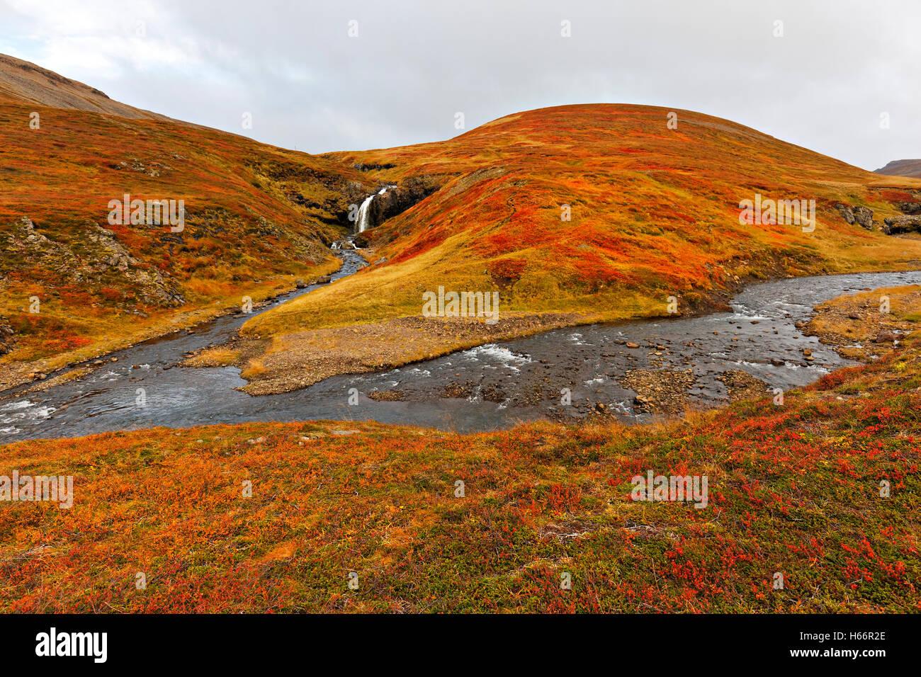 Kleiner Wasserfall in goldene Herbstlandschaft, Westisland, Nordatlantik, Europa Stockbild