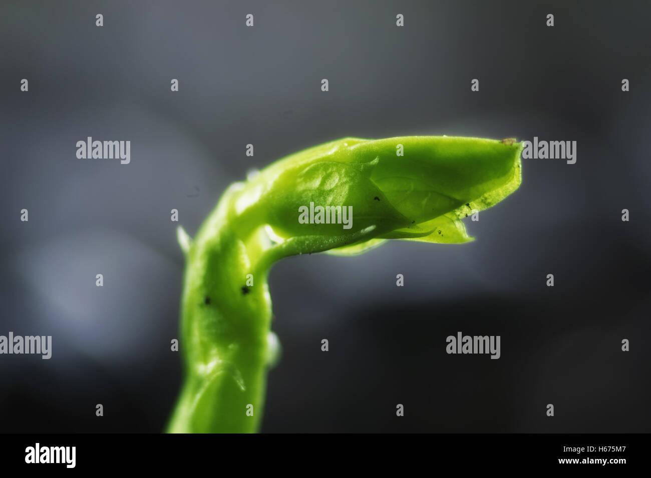 neue Samen grünen Rasen Stockbild