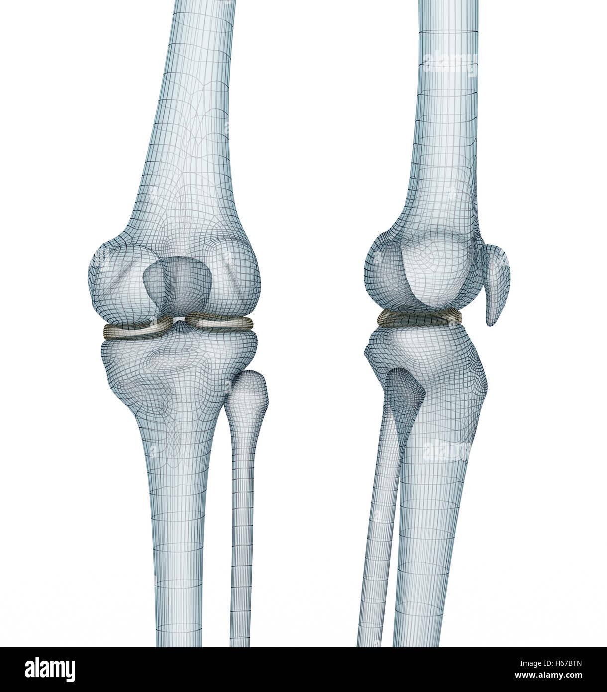 Berühmt Kniegelenk Anatomie Ppt Ideen - Menschliche Anatomie Bilder ...