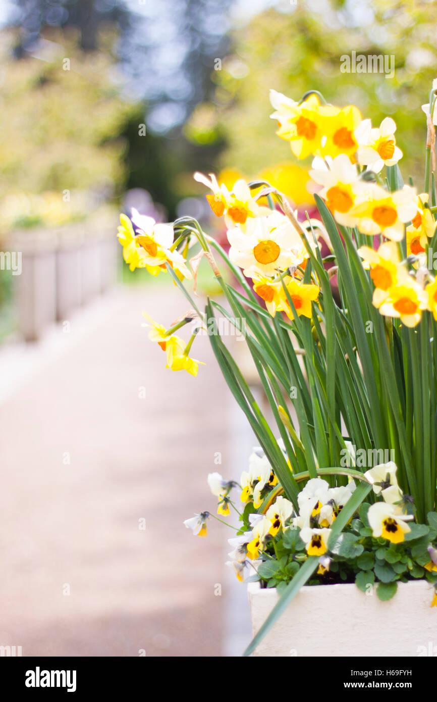 Daisy Blume Blüte grüne Garten Gärten Blütenkopf Blütenköpfchen ...