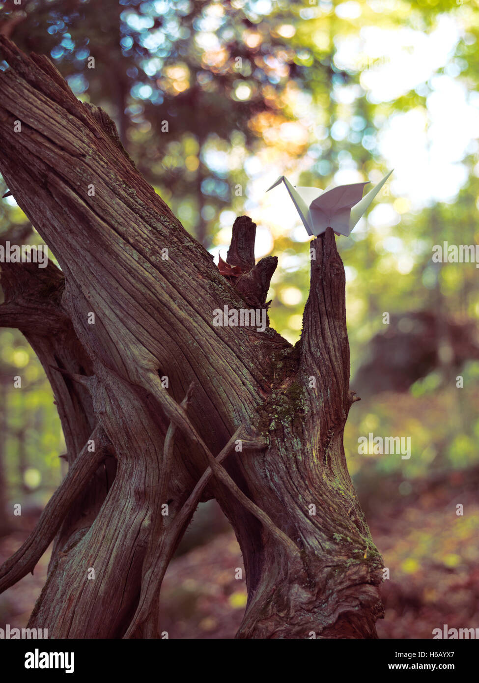Origami Papier Kran sitzt auf einem getrockneten Baum im Herbst Natur Landschaft Stockbild