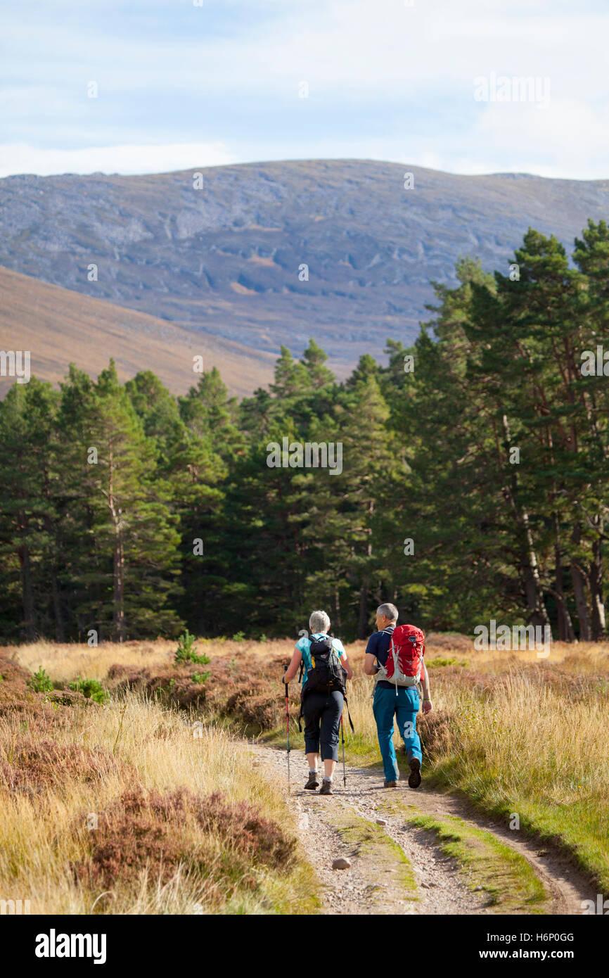 Wanderer geniessen Herbst Wetter, da sie durch die Rothiemurchus Estate Wanderung in Richtung Pass, geht in Richtung Stockfoto