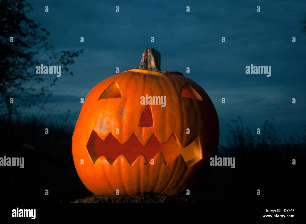 Ein Kürbis für Halloween. Stockbild