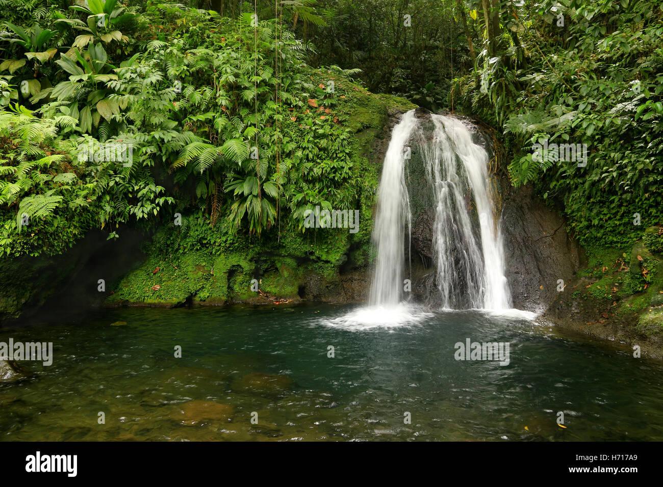 Schöner Wasserfall in einem Regenwald. Kaskaden Aux Ecrevisses, Guadeloupe, Karibische Inseln, Frankreich Stockbild