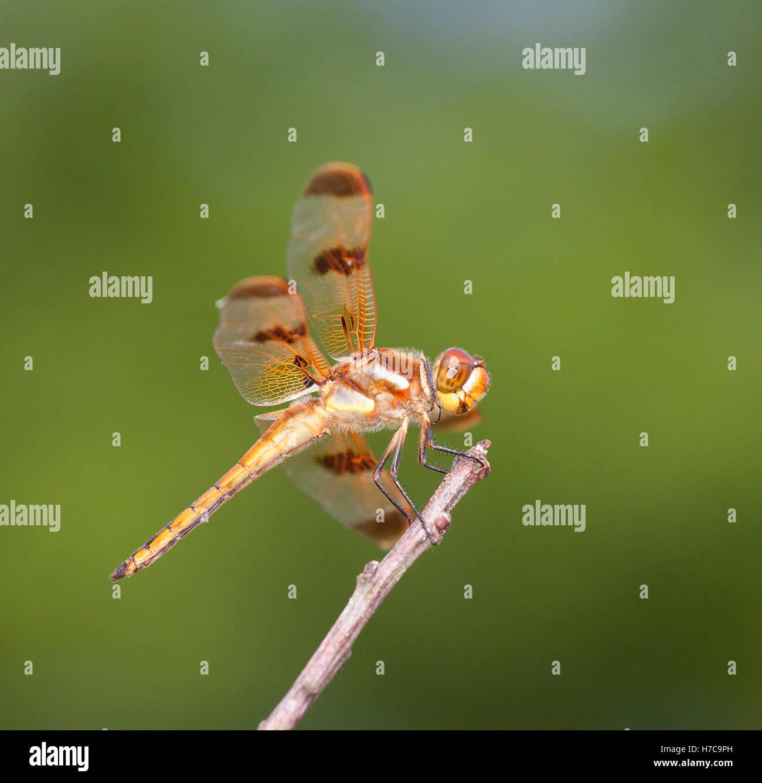 Tolle Libelle Farbung Seite Fotos - Malvorlagen Von Tieren - ngadi.info