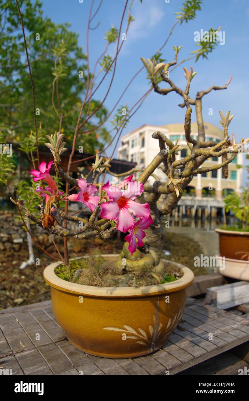 eine tropische orchideen in den blumentopf draußen an einem sonnigen