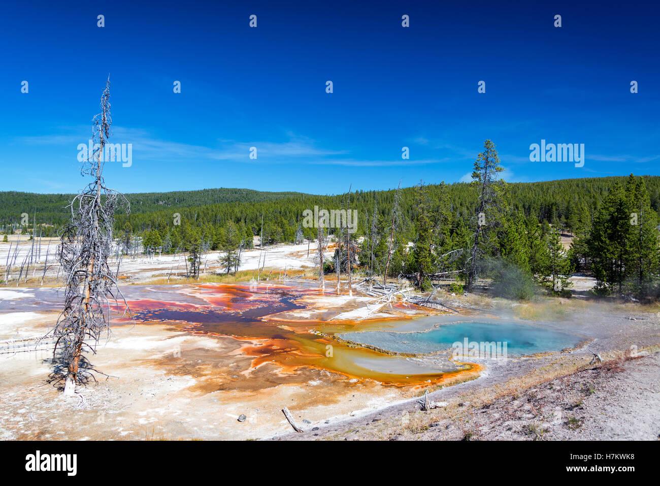 Bunte Frühlings- und bewaldete Landschaft gesehen von Firehole Lake Drive im Yellowstone National Park Stockbild