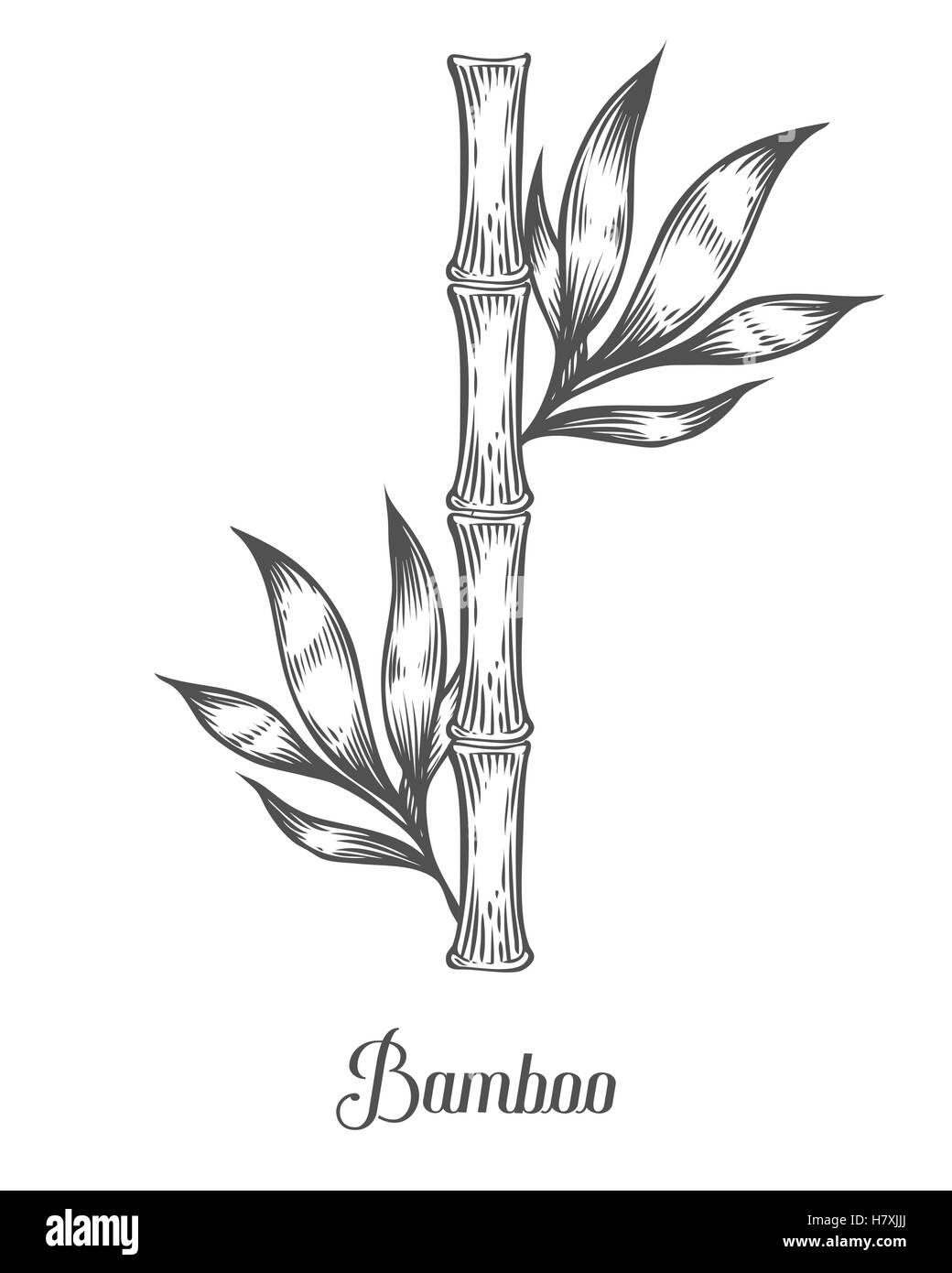 Bambuszweigen Stiel Und Blatt Vektorgrafik Hand Gezeichnet