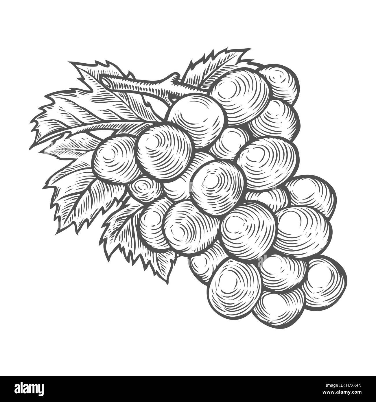 Trauben Mit Blättern Früchte Beeren Süße Wein Sangria Zutat
